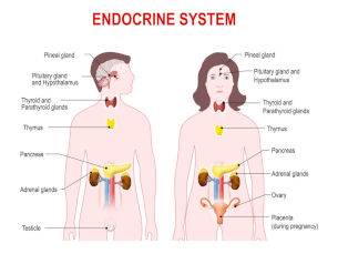 The Effects of Anxiety on the Endocrine System